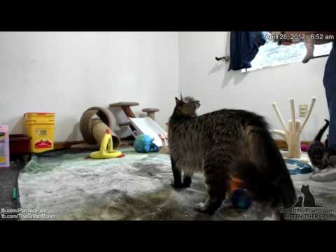 Gaia's Kittens - Early Morning 4-28