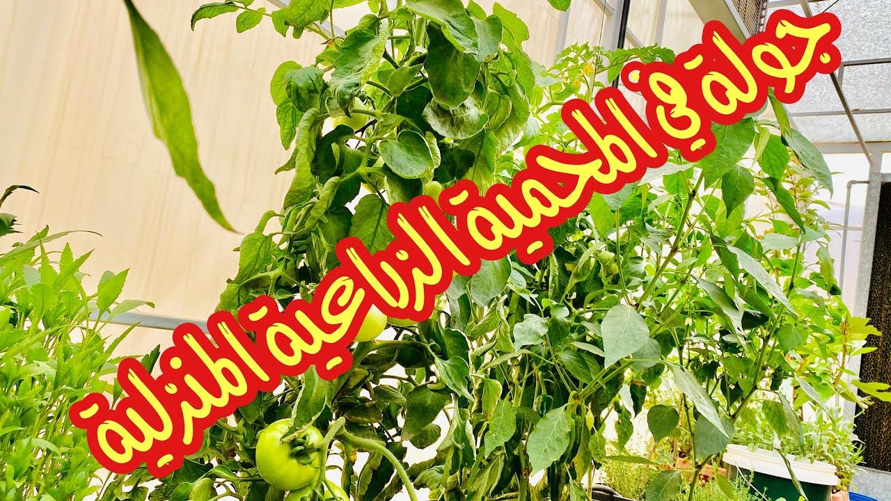 جولة في المحمية الزراعية    والتعرف على نباتاتها