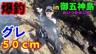 出たぜグレ50cmオーバー!御五神島でトーナメンターが暴走!! thumbnail