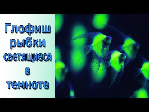 Рыбки светятся ночью??? GloFish рыбки светящиеся в темноте