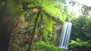 Clive Lendich - Rainforest Rendezvous (album)(HQ Audio)