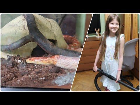 VLOG Что принесла мышка Кире за зуб / Линька у змеи / Убирает ли Кира дома?