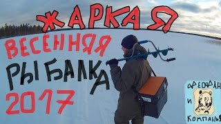 Охота и рыбалка в Карелии Закрываем сезон зима 2018 (День второй-ставим рыболовные капканы.)