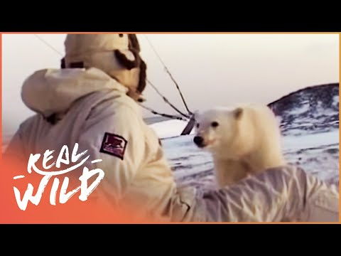 Polar Bear Cub Wants To Befriend Humans | Wild Things Shorts