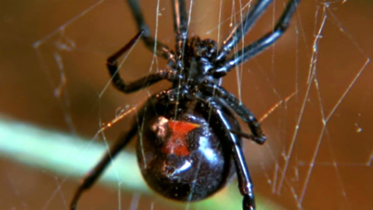 Facts About Spiders  - Secret Nature