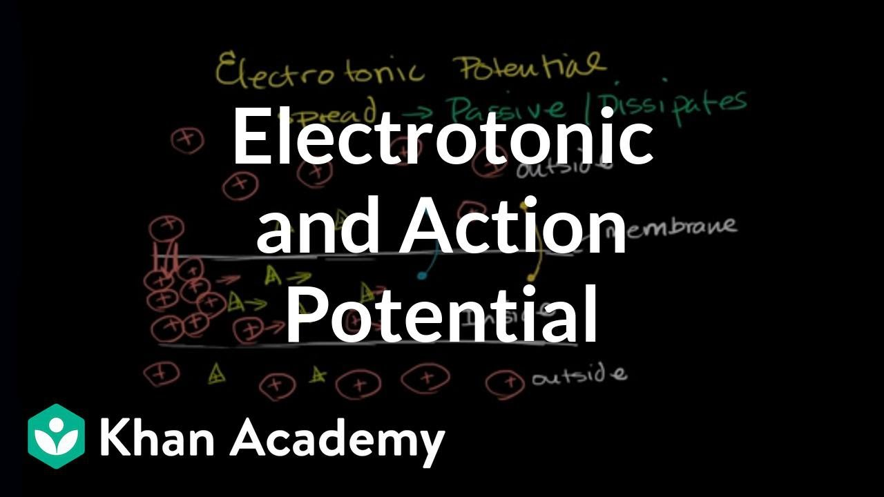 Electrotonic and action potentials | Human anatomy and physiology ...