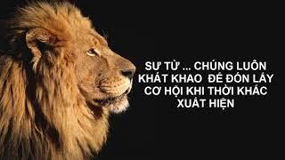 Video tạo động lực   Thái độ sư tử I Goldenlifes   Motivational video   Lion attitude