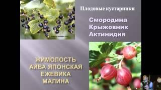 видео Плодовые кустарники для сада