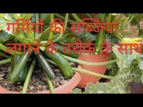 Summer vegetables with growing method Kitchen gardening tips Gardening skills