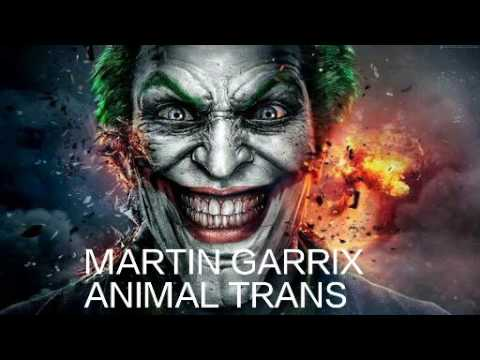 MARTIN GARRIX ANIMAL TRANS