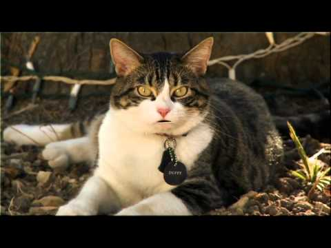 Best Of: A Talking Cat!?!