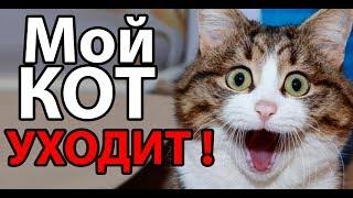 Мой кот УХОДИТ !