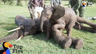 Baby Elephant Stays With Injured Friend + Awesome Animal BFFs | The Dodo Top 5 - Best Friends Day thumbnail