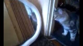 кошка смотрит в зеркало супер ржач