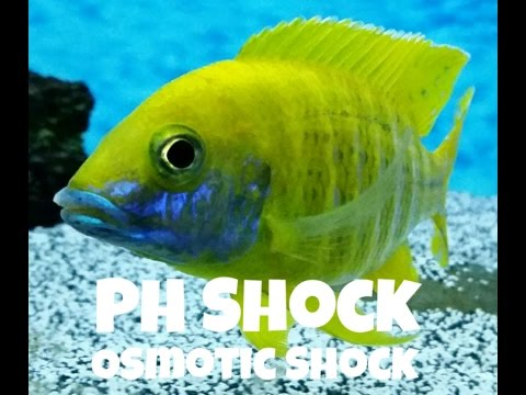 PH Shock | Osmotic Shock | Protect Your Fish