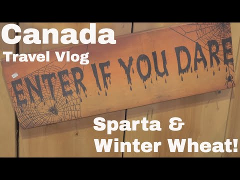 Canada Travel Vlog - Sparta and Winter Wheat!