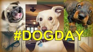 СОБАКИ. Любимые фотопортреты семейства собак #DogDay (HD)