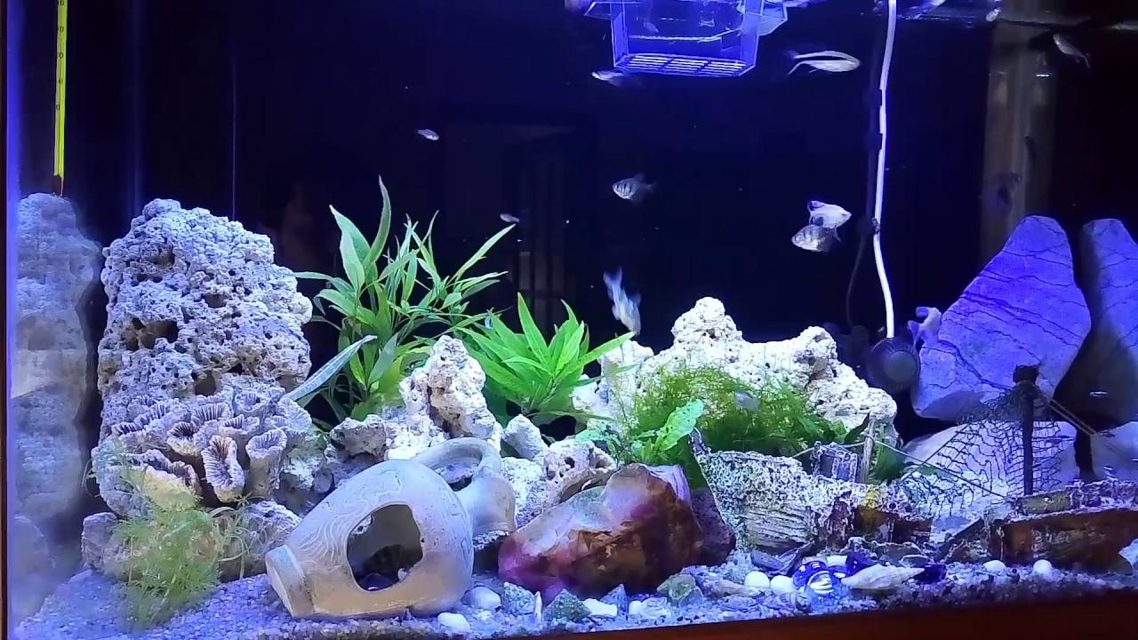 Acquario pesci tropicali acqua dolce youtube for Pesci acqua dolce commestibili