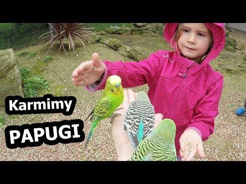 Papugi Faliste i Strusie w Parku Australijskim (Vlog #159)
