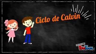 Fotosíntesis. Ciclo de Calvin.