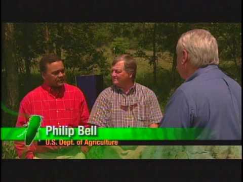 Emerald Ash Borer: The Green Menace
