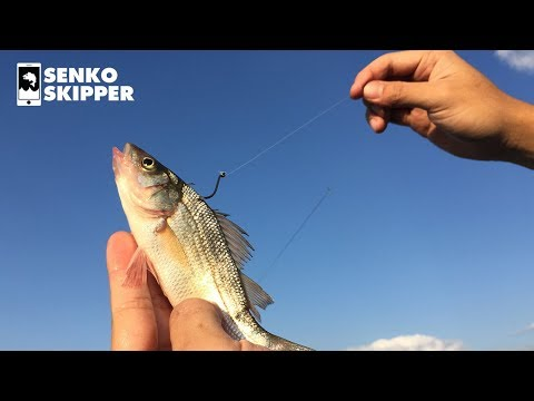 Using Small Fish To Catch BIG FISH! Live-Line Tutorial!