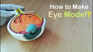 How to Make Model of Section of Eye Using Thermocol