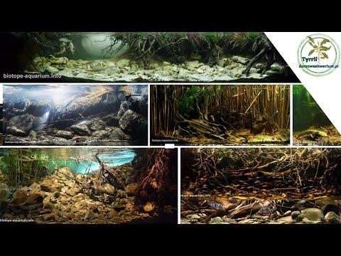 top-10-aquarium-of-biotop-aquarium-design-contest-2019.