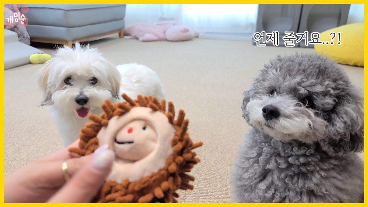 요즘 강아지 장난감 클라스 ㄷㄷ