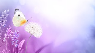Deep Healing Energy - 528Hz Love Frequency Music - Positive Aura Cleanse - Soothing Meditation Music