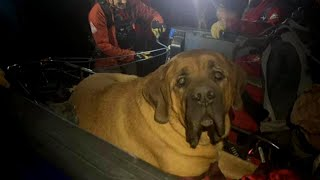 A 190-Pound Dog Had to Be Carried Down a Mountain
