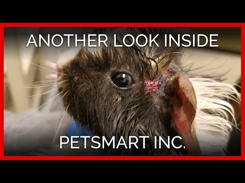 Another Look Inside PetSmart, Inc.: A PETA Eyewitness Exposé