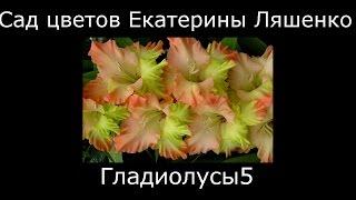 #Гладиолусы зеленые Сад Цветов Екатерины Ляшенко