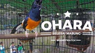 BRANDY WATCH : GOPRO - Ohara Is Back ! Penampilan Pertama Selesai Mabung Bersama AK47 Team