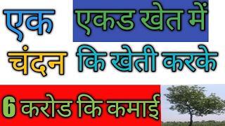 एक एकड में चंदन कि खेती करके 6 करोड कि कमाई।how start a sandalwood farming in india