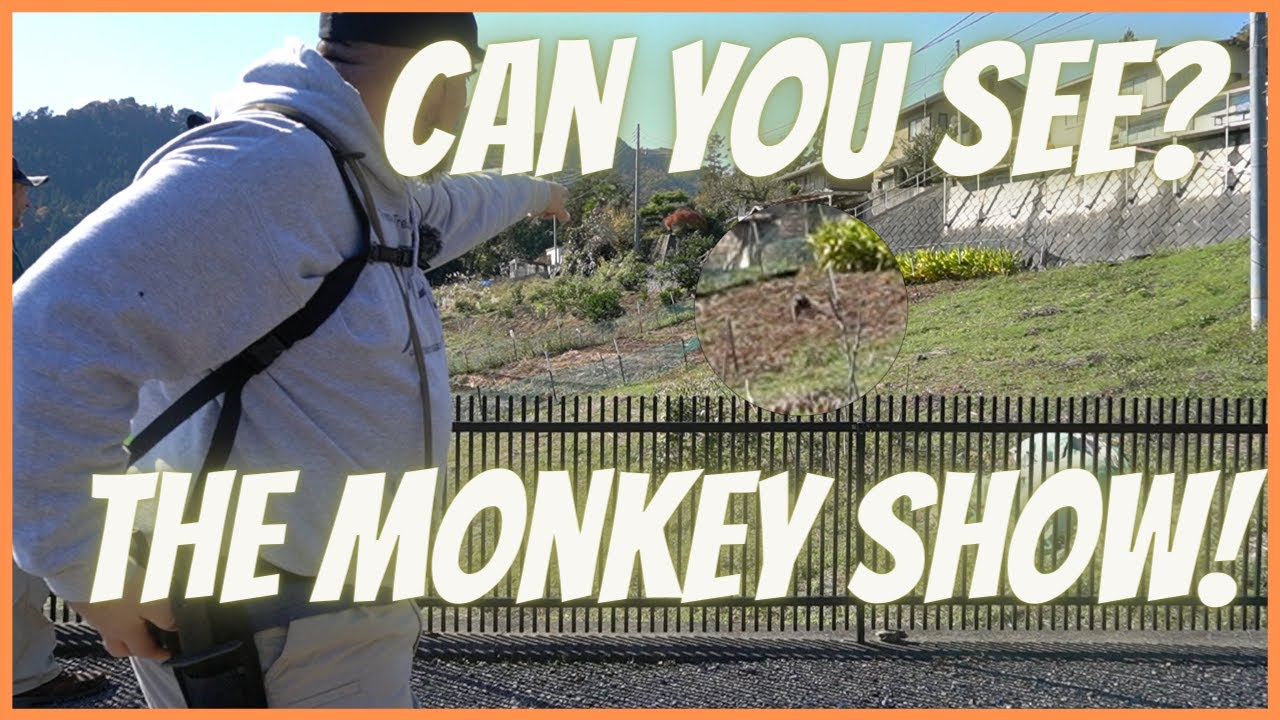 Can You See the Monkey Show! #shorts