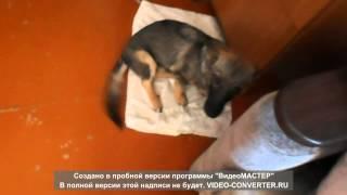 Непонятный кашель у нашей собаки_3
