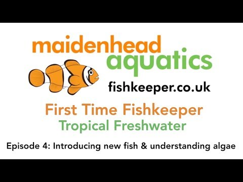 First Time Fishkeeper Episode 4: Introducing New Fish And Understanding Algae