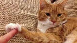 Mylo the Cat... Webby Award Winner?