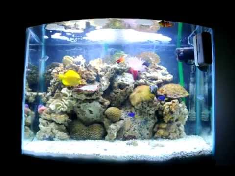 29 gallon bowfront saltwater aquarium and bob marley youtube for Saltwater fish for 10 gallon tank