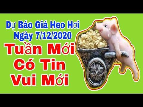 Dự báo giá lợn hơi ngày 7/12/2020 - Giá heo hơi hôm nay 7/12/2020 tuần mới có tin vui mới