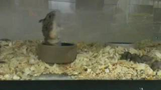 LOOK at this freakin' hamster