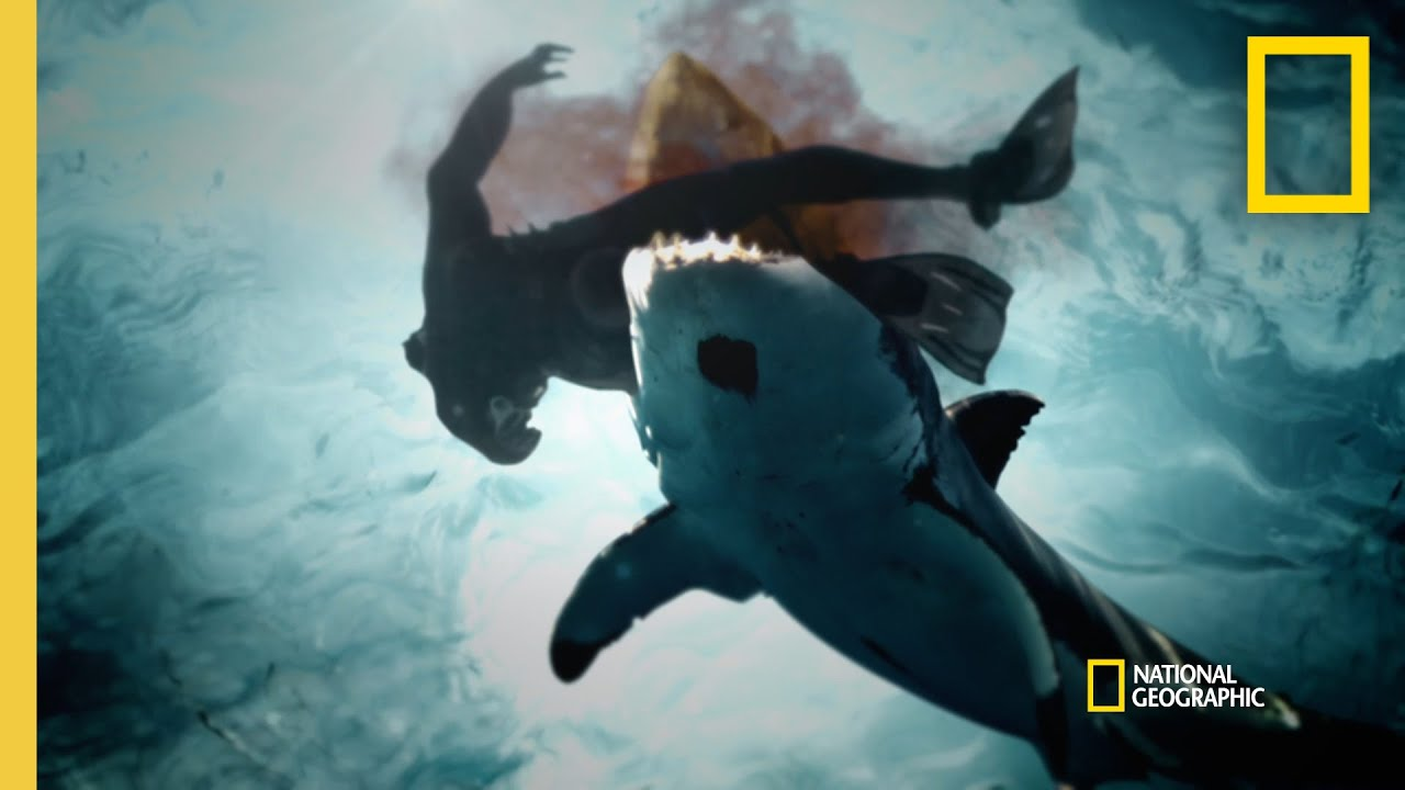 A String of Shark Attacks in San Diego | When Sharks Attack