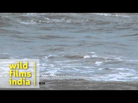 Arabian sea waves: Quilon, Kerala