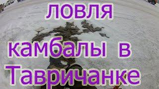 Ловля камбалы в Тавричанке Зимняя рыбалка в Приморском крае