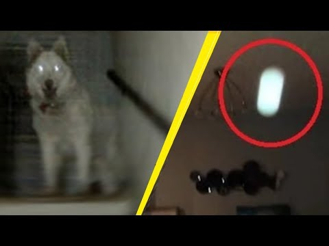 5 Creepy Times Dogs Were Seeing Things Their Owners Couldn't!