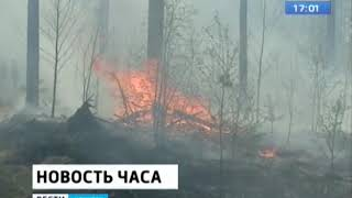 Гринпис назвал возможное число животных, пострадавших от пожаров в лесах Сибири