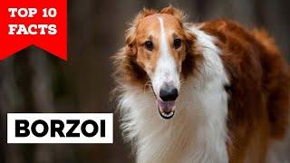 Borzoi  Top 10 Facts