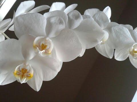 Орхидеи - SendFlora +7 (499) 391-03-04 Цветочный магазин