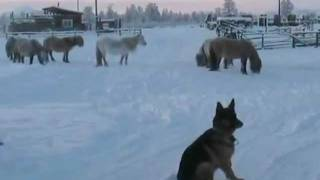 Hot water turns to snow in Oymyakon, Russia at - 52 °C - YUCHUGEY IS THE COLDEST PLACE ON EARTH